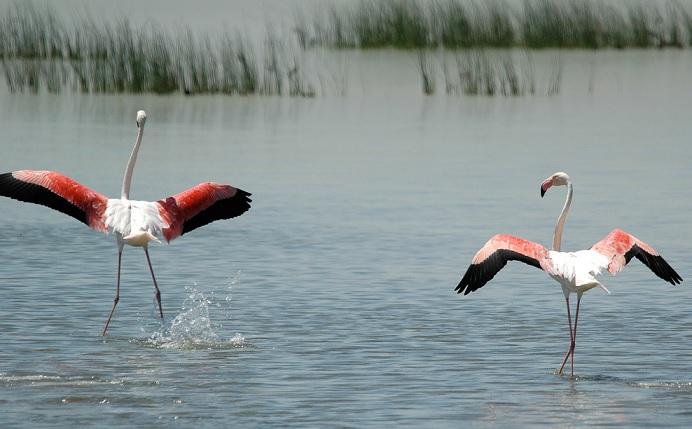 Flamencos en el Parque Nacional de Doñana